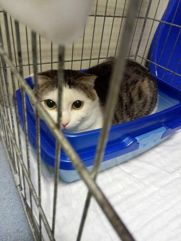Кот 2 года прожил в семье, но от него просто избавились, как от ненужной вещи история, кастрация, кот, кошка, приют