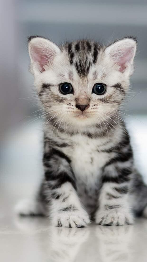 Обои Котенок, кот, Kitten, Cat, cute, 4K, Животные #18289