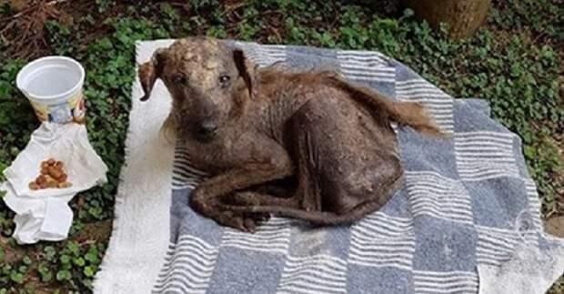 На собаке практически не было шерсти и она уже не надеялась на спасение