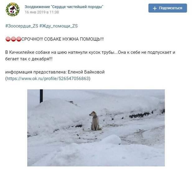 Эти события произошли в Пензенской области. Первыми тревогу забили зоозащитники, разместив данный пост у себя в группе. жестокость, зоозащитники, история, пенза, пензенская область, пес, собака