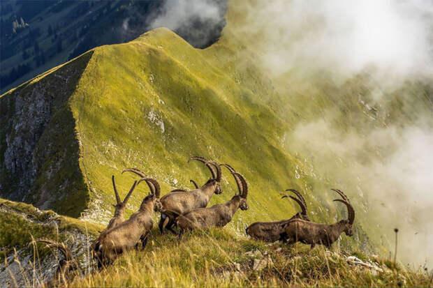 Великолепные работы победителей тревел-фотоконкурса National Geographic 2019