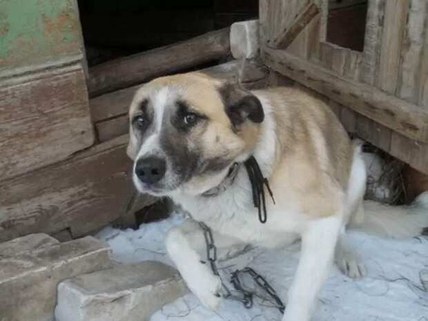 """Это пёс Мишка. Он """"предсказывал"""" пожары в Тверской области, когда там объявился поджигатель."""