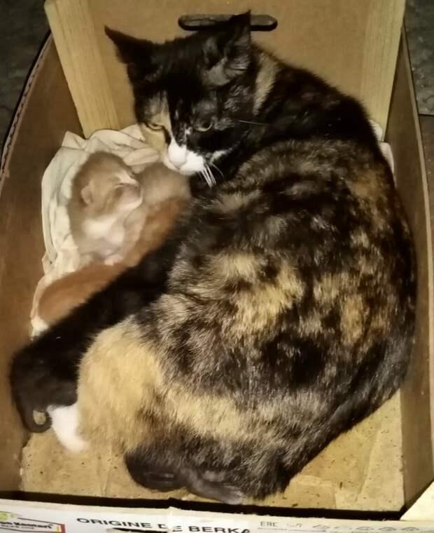 Помогите, пожалуйста! Этих крошечных котят подстерегает масса опасностей, не исключена даже смерть...