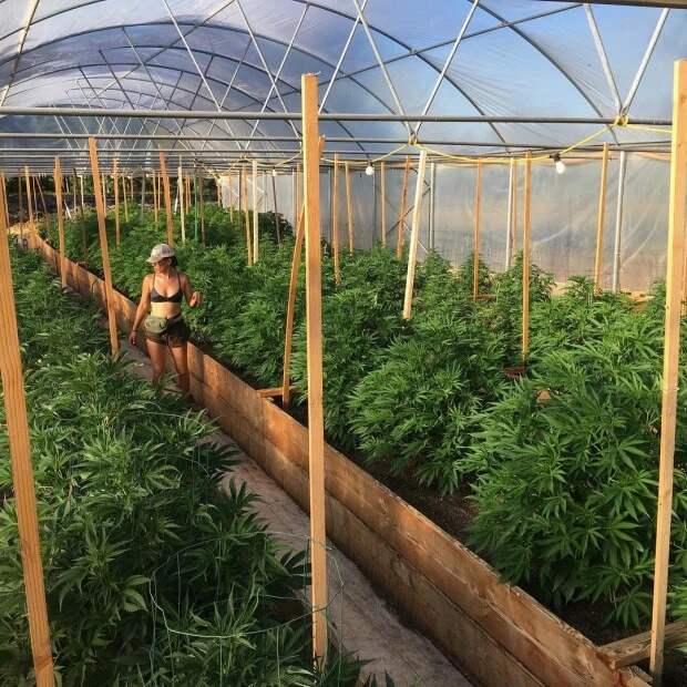Выращивают коноплю, отбиваются отмедведей: подруги отказались откомфорта, чтобы жить «вне зоны доступа»