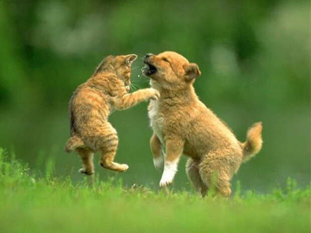 Cat Vs Dog Fight Download Page - All About Animal Tips All About Animal Guide!