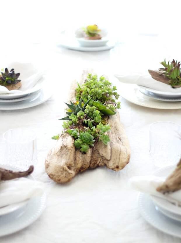 Декор стола. Делаем композицию из коряги и суккулентов