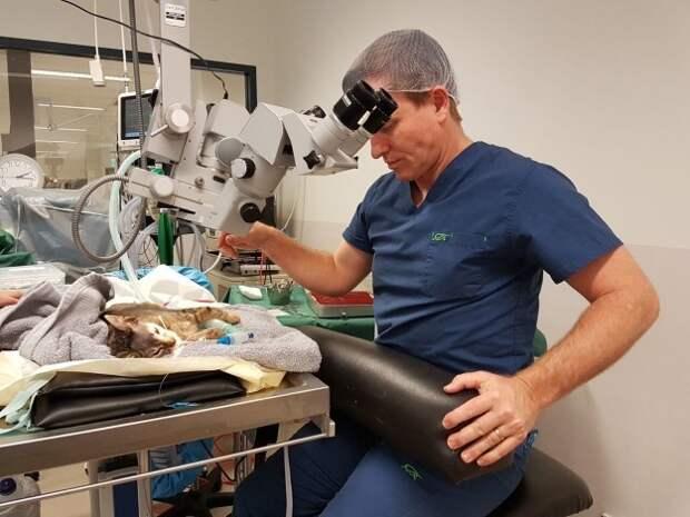 Сложнейшая операция спасла жизни двух шестимесячных котят ветеринары, животные, котята, спасение жизни