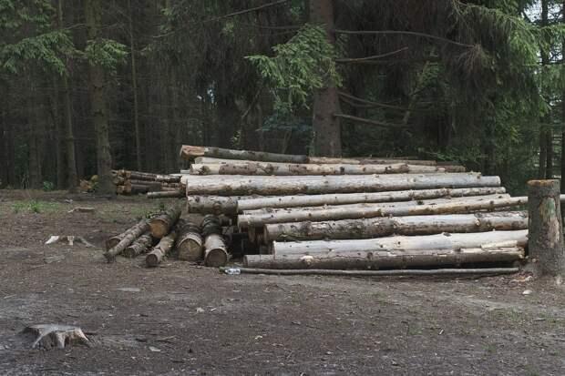 Следком завершил расследование масштабной вырубки леса в Иркутске