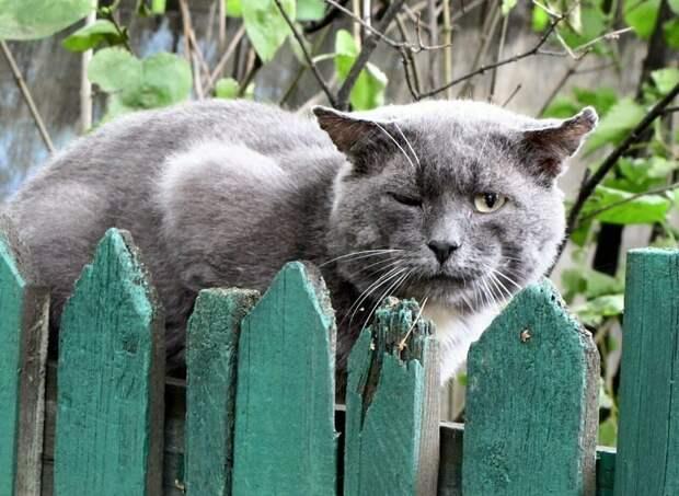 Что-то грустно стало город, домашние животные, забор, кот, кошка, село, улица, эстетика