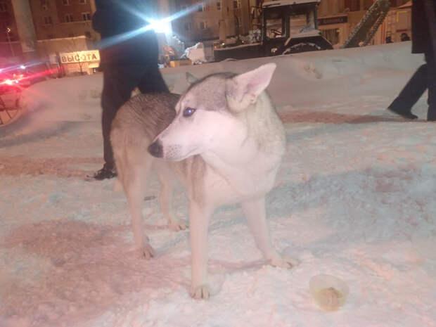На месте происшествия на Мещерском бульваре найдена собака