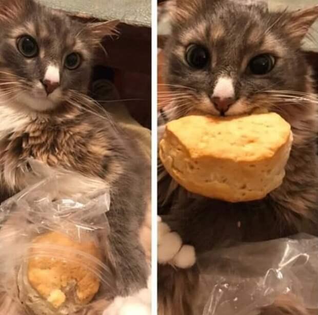 кошка и печенье
