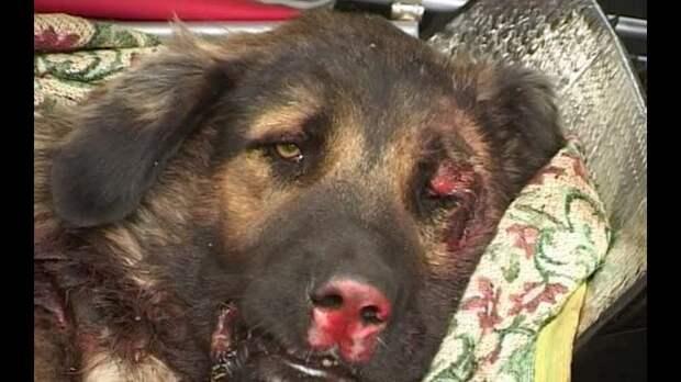 Минута позора, отчаянья и боли. Один день из жизни ветеринарного врача. Просто выдержки из практики…