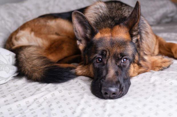 Спасла собаку, а она в благодарность спасла члена моей семьи!