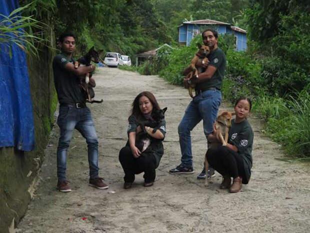 Из 36 спасенных собак 12 погибло.