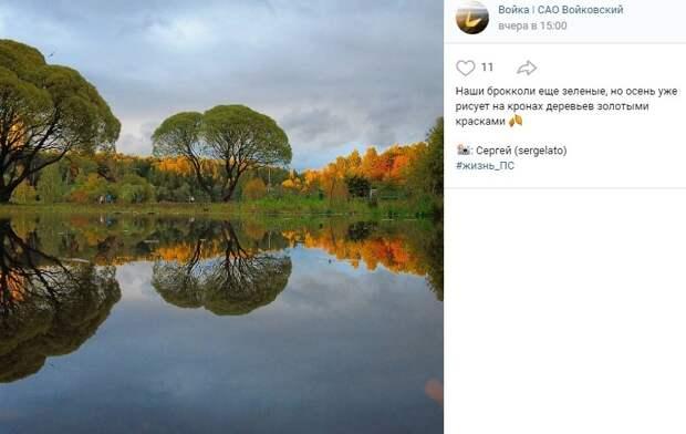 Фото дня: в «Покровском-Стрешневе» заметили гигантские брокколи
