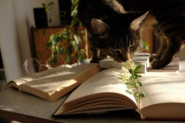 Пять комнатных растений, которые безопасны для домашних животных
