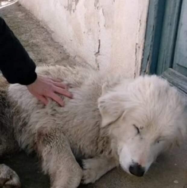 Собака и рука