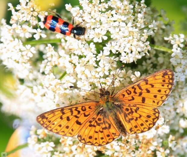 В Куркине начался массовый лет бабочек