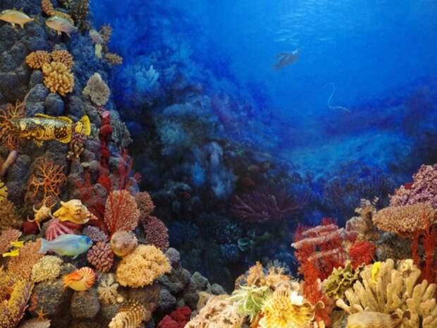 ЮНЕСКО отказалось вносить Большой Барьерный риф в список находящихся в опасности объектов
