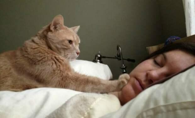 """6. """"Ежедневный ритуал нашей кошки - каждое утро будить мою падчерицу, пока я чищу зубы и одеваюсь. Я должна отнести ее в комнату Кики. Она подбегает к кровати, ложится на нее, обнюхивает лицо и покусывает брови, чтобы разбудить,"""" - TrendyKitty животные, забавно, забавные животные, истории, питомцы, подборка, собаки, хозяева"""
