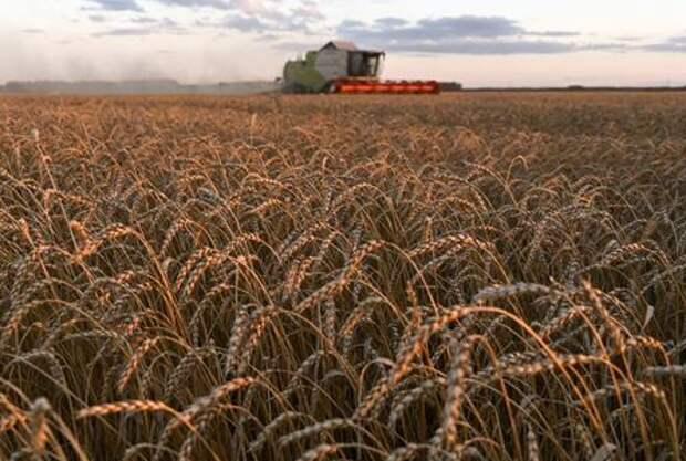 A combine harvests wheat in a field of Triticum farm in Omsk region, Russia September 16, 2020. Picture taken September 16, 2020. REUTERS/Alexey Malgavko