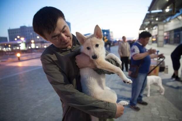 В России щенок-клон встретился с собакой, из которой его создали