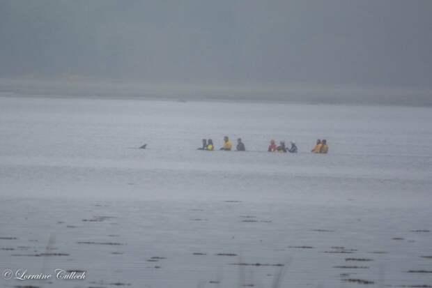 К дельфинихе быстро вернулись силы, и она уплыла от своих спасителей  дельфин, животные, спасение