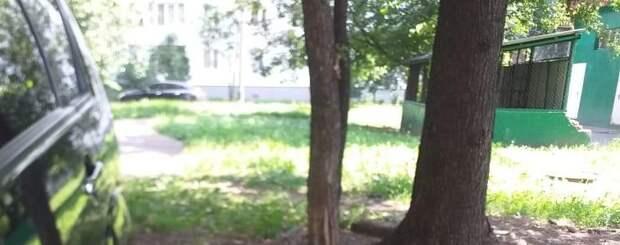 Двор в проезде Шокальского очистили от мусора после жалобы жителей