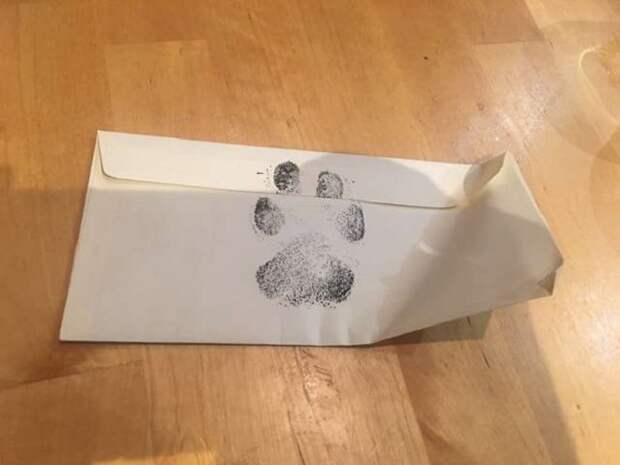 Друзья мечтали о собаке, но не могли завести ее. Увидев пса у соседей, парни решили написать людям необычное письмо