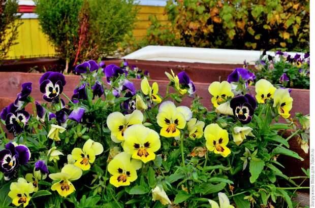 Сад непрерывного цветения - мечта, которую может осуществить каждый