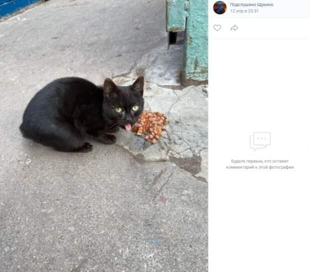 В соцсети разыскивают хозяев кота, потерявшегося у метро «Октябрьское Поле»
