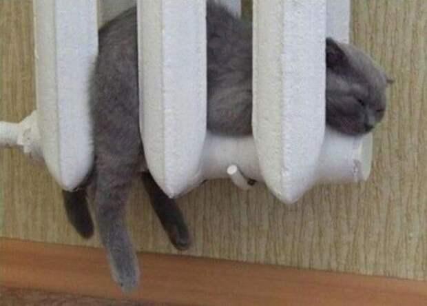 Котейки всегда найдут там, где тепло Приятно, жидкость, коты, кошки, тепло, удобно