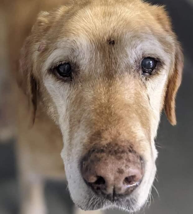 Пожилой пес вернулся к хозяину после 10 лет скитаний