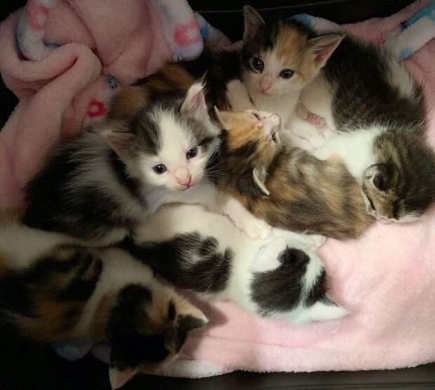 Спасённые котята уже подросли, но почему-то любящий хозяин всё никак не появляется в жизни милых мурлык