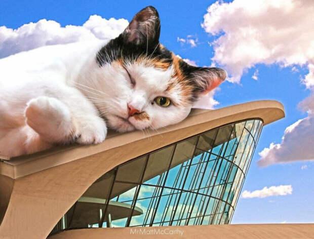 Фотохудожник продолжает показывать, каким был бы мир, если бы его захватили гигантские кошки (25 фото)