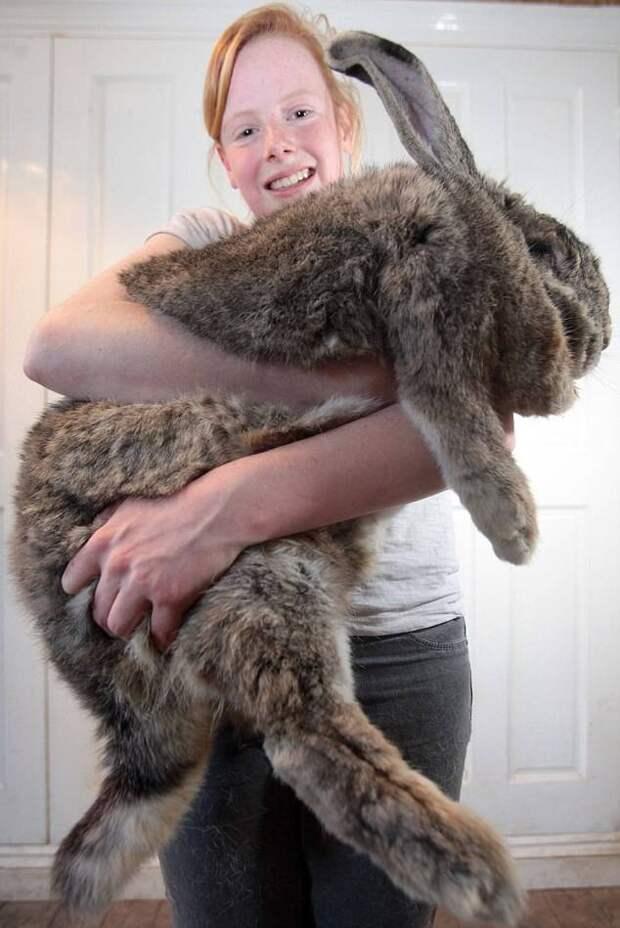 13 животных внушительных размеров
