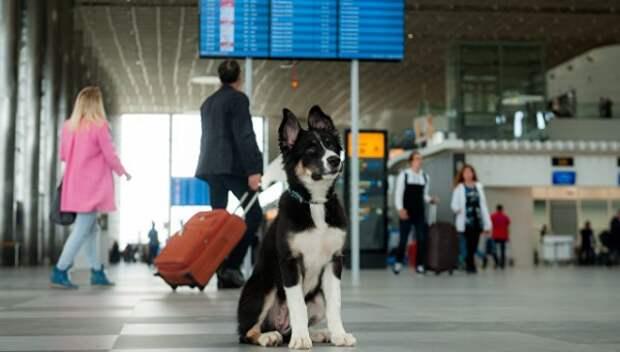 Хвостатый талисман симферопольского аэропорта обрёл поклонников из всех стран мира (ФОТО)