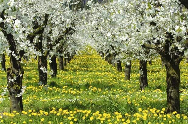 Погодная аномалия 2021 года, чем она страшна для садов и огородов, что надо делать, чтобы не остаться без урожая. Советы агроном