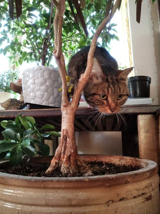 Когда цветы старше, чем кошки