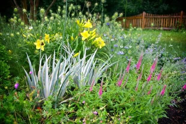 Пёстролистные ирисы в сочетании с цветущими лилейниками