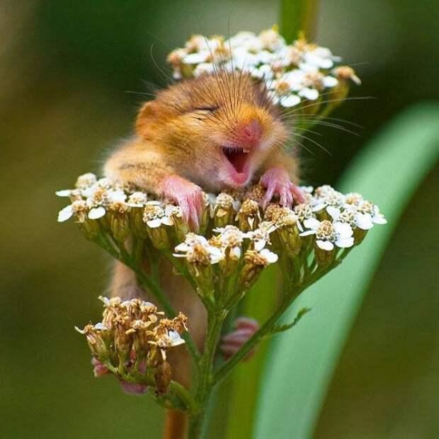 Жизнь принадлежит тому, кто ей рад!