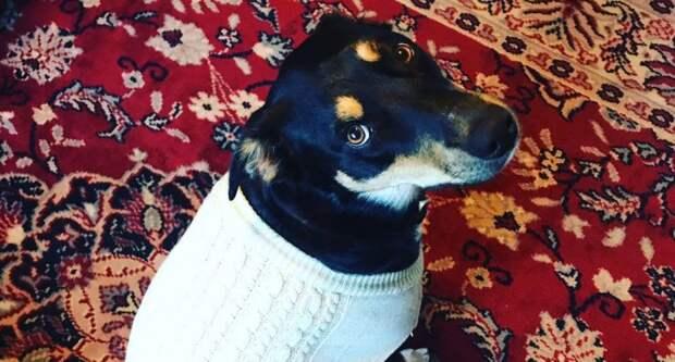 Как собака надула своих хозяев