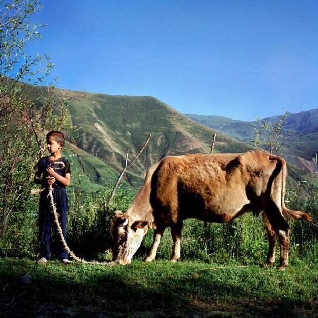 Летом дети помогают заботиться о скоте, зимой ходят в школу жизнь простых людей, миграция, таджикистан
