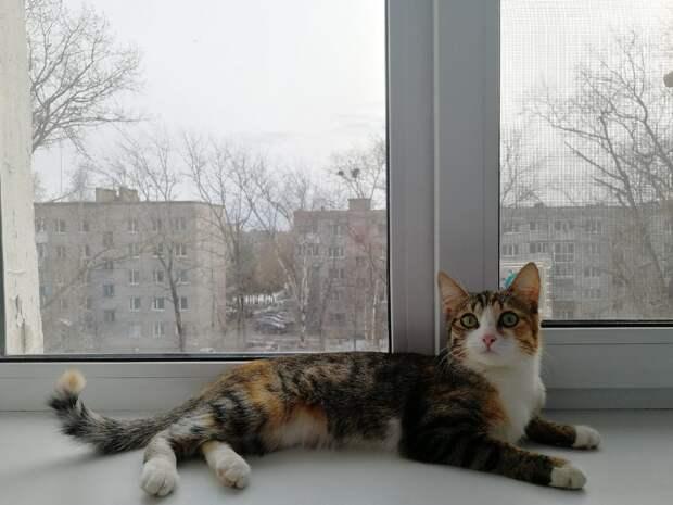 кошка на окне