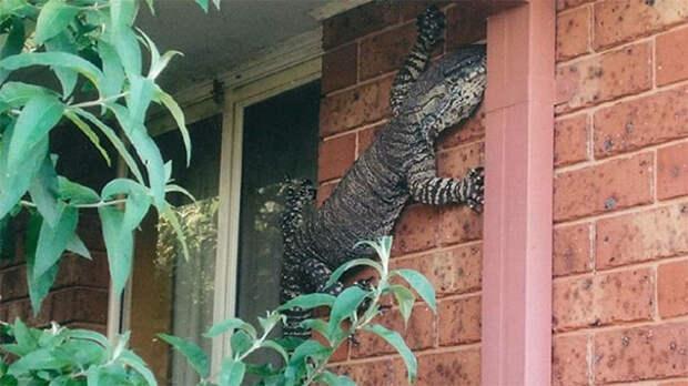 8 жутковатых фото, которые доказывают, что жить в Австралии стремно