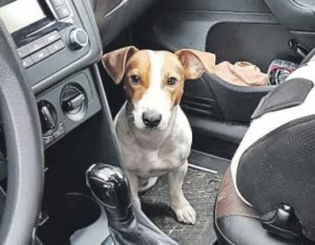 Быстрая реакция помогла соцработнику из Ростокина спасти щенка