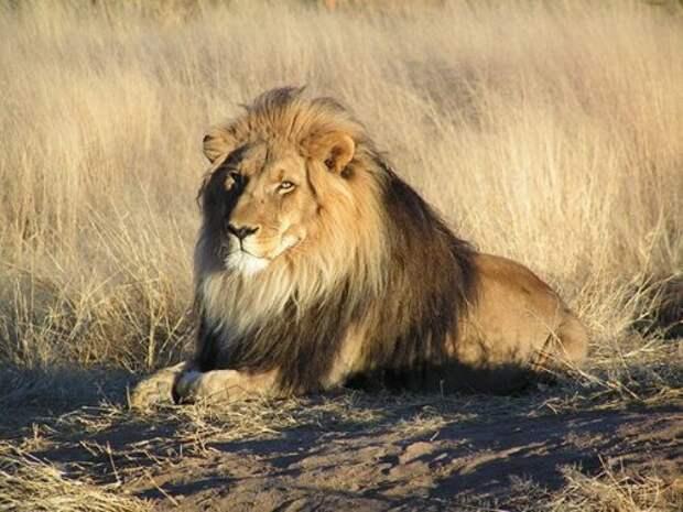 ТОП-25: Животные, которые могут запросто убить человека