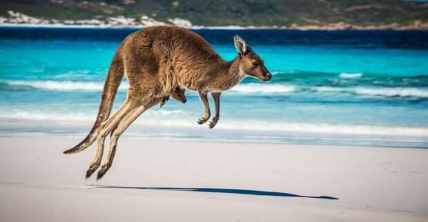Опасности путешествия по Австралии