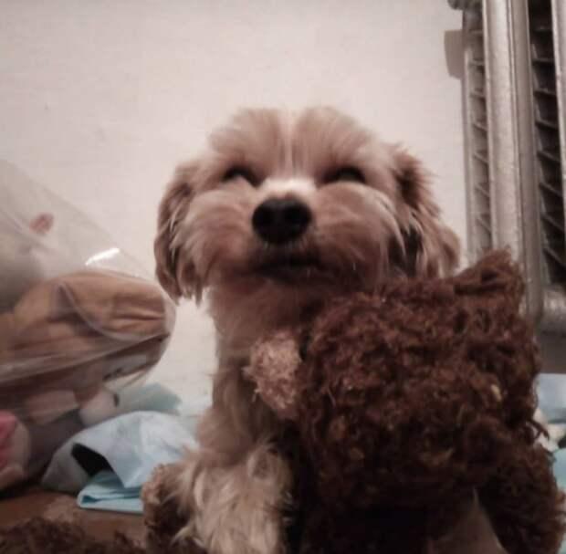 пёс с игрушкой