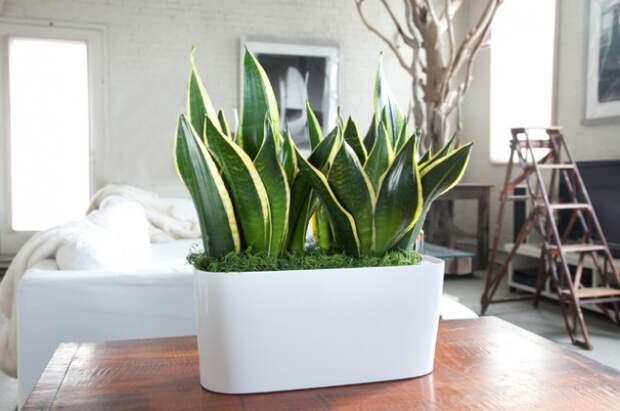 9 комнатных растений, которые не требуют много внимания и воды